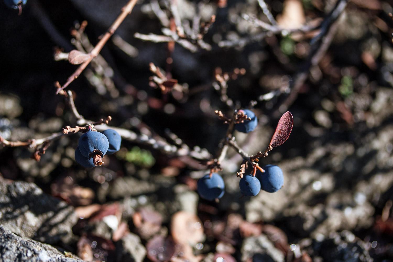 Nature, blue berries, responsible travel,