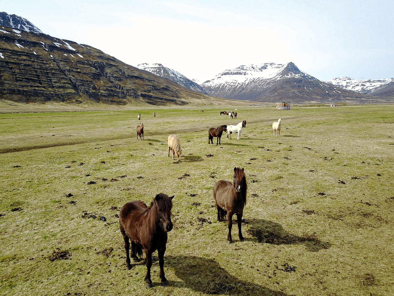 Reiðtúr, horse riding, hestaferðir, austurland, east iceland, Iceland